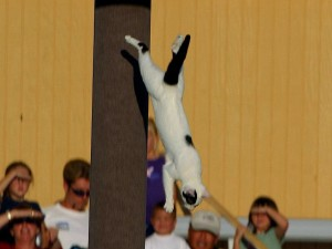 chats, saut