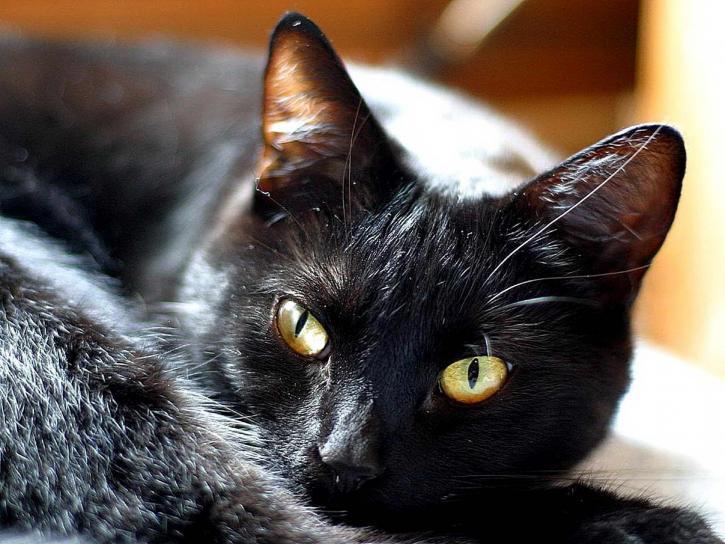 mačky, mačiatka, mačička