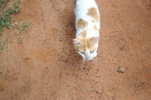 curious, cat
