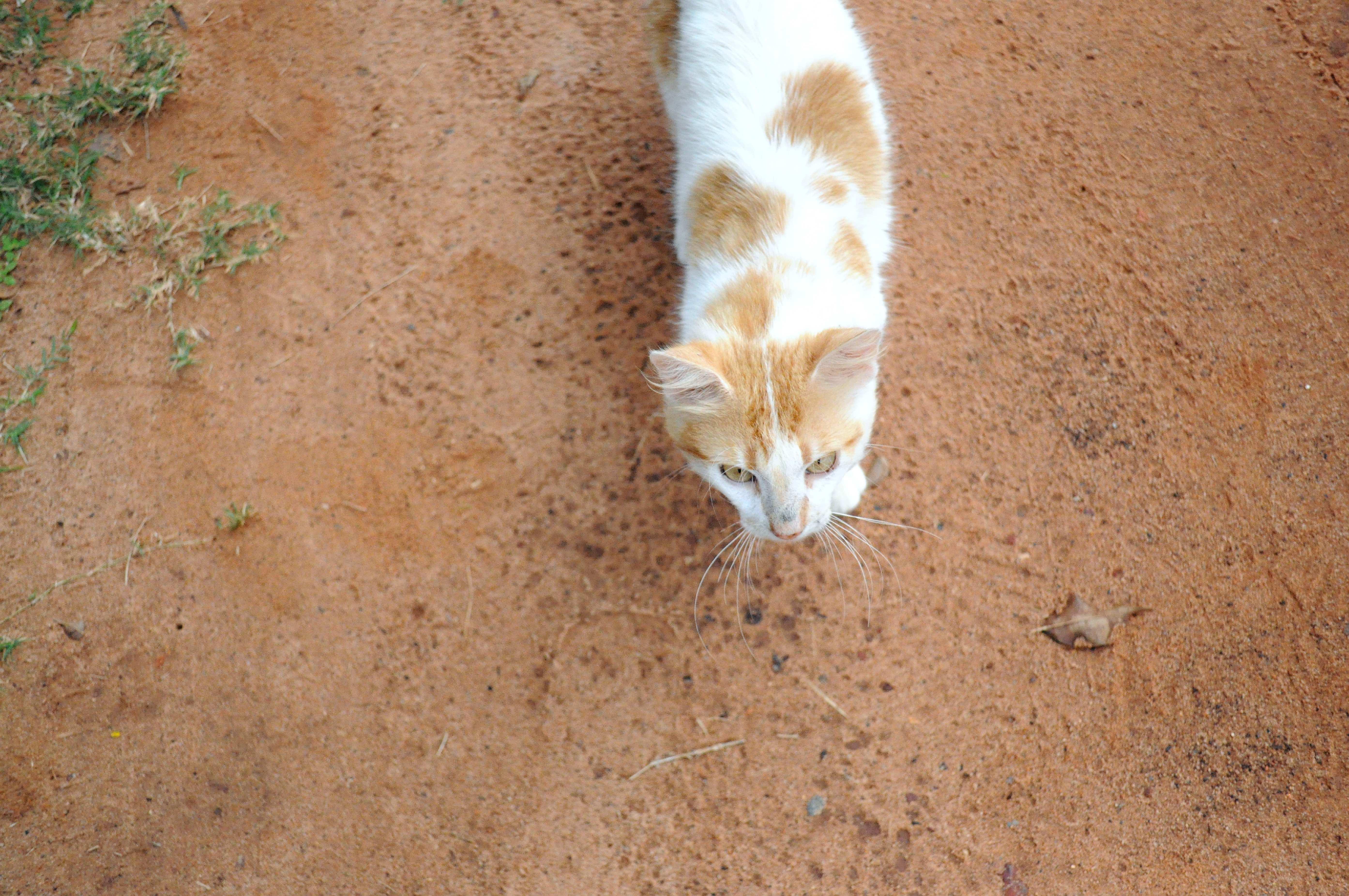 Free photograph; curious, cat