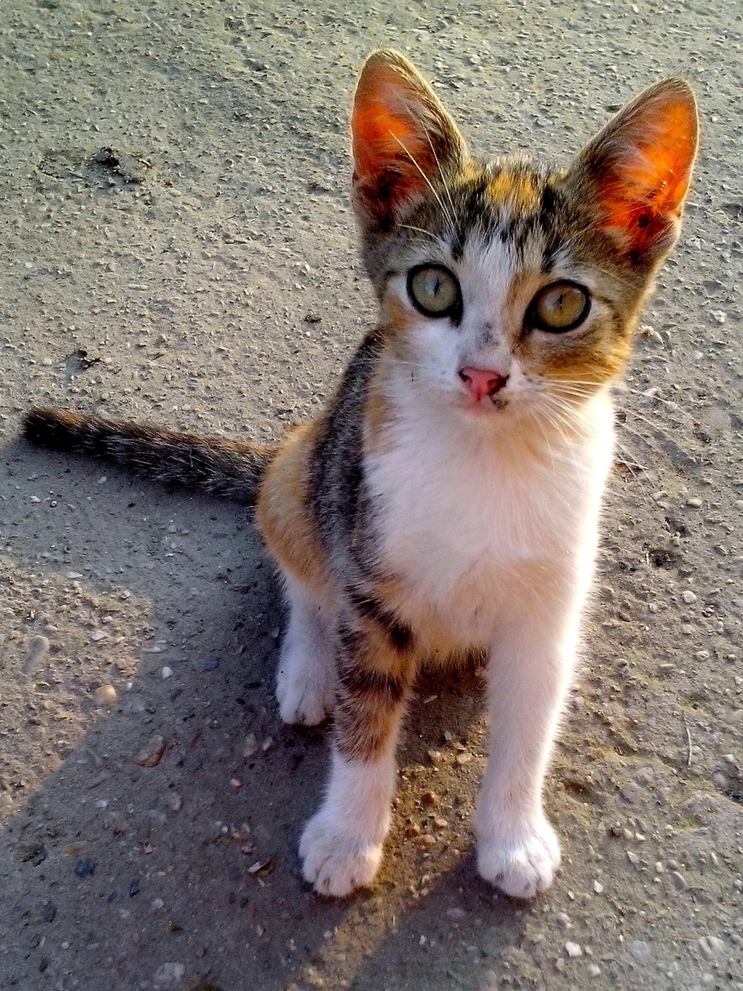 Free photograph; cute, cat, pet, looking