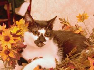 domestik, pendek berambut, kucing, kering, musim gugur, bunga
