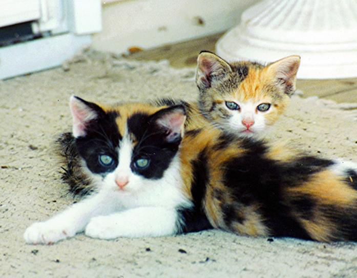 What is the best flea treatment for long haired cats