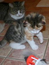kittens, home