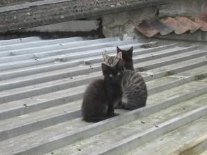 kittens, roof