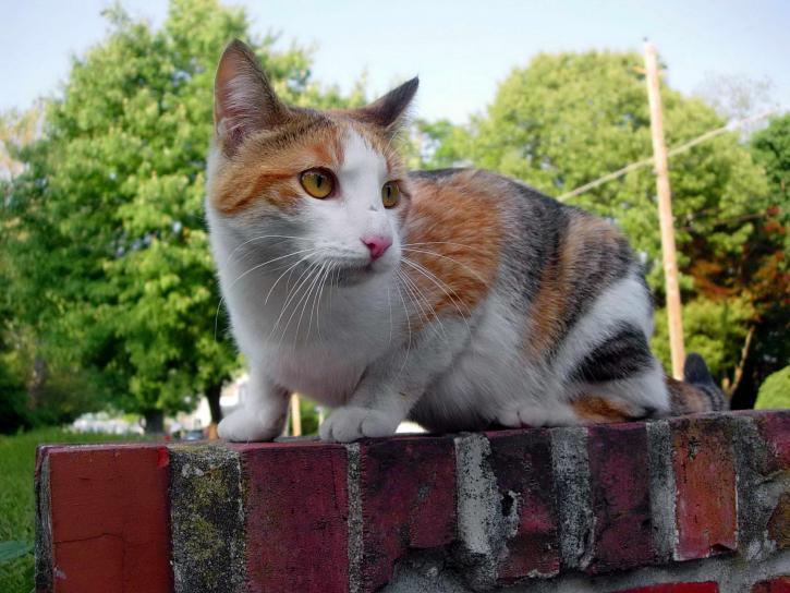 stray, cat, wall