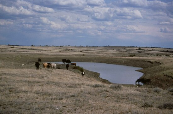 farm, cattle, animals, watering, hole