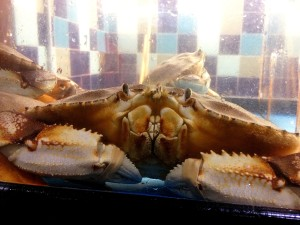 dungeness, crabes, sous-marins, les animaux