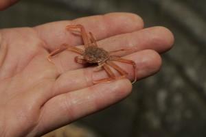 wenig, Krabben, Hände