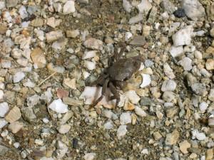 small, crab