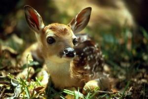 cute, deer, fawn