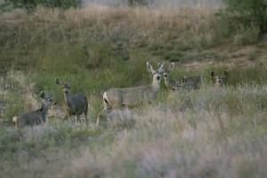 herd, deer, mammals