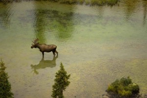 aerial, photo, moose, river