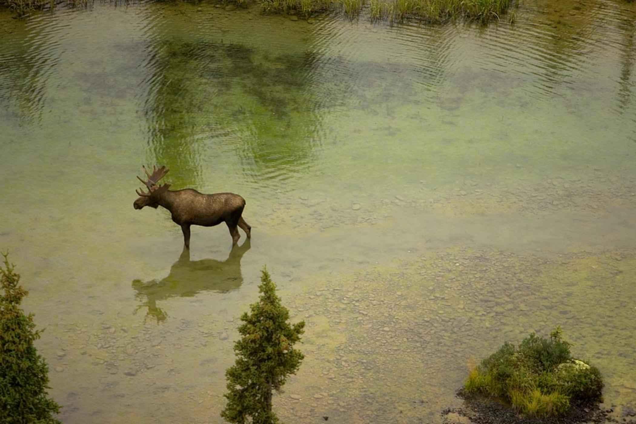 Aerial Photo Moose River