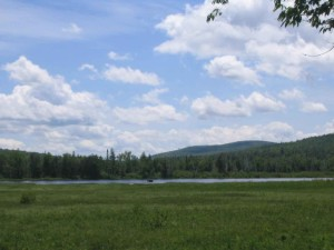 moose, distance, lake, umbagog, wilderness, refuge