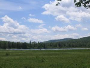 moose, distance, lake, umbagog, wilderness, refuge