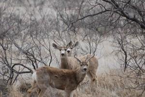 3, 사슴, 사슴, 스탠드, 숲 속, 지역