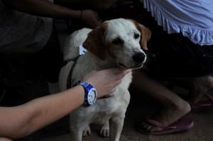 beautiful, white, dog, owner