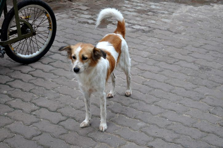 colorful, street, dog