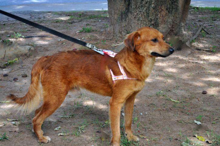 dog, leash, street