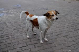 sweet, street, dog, posing, sidewalk