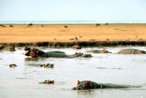 Изток, Африка, хипопотам, вода