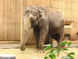 Elefant зоопарк