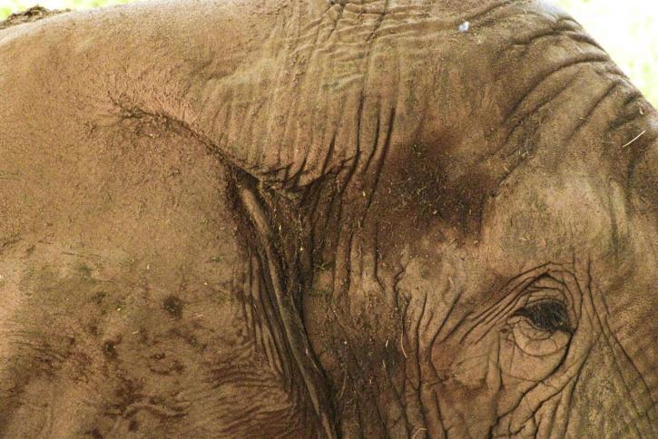 слон, up-close, животно