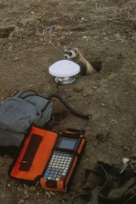 black, footed, ferret, borrow, entrance, investigating, scientific, equipment