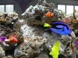 Gruppe, real, Fisch, schauen, Fisch, finden, nemo