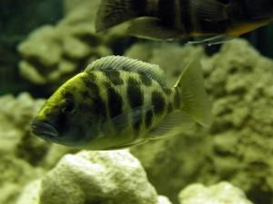 aquarium, animals