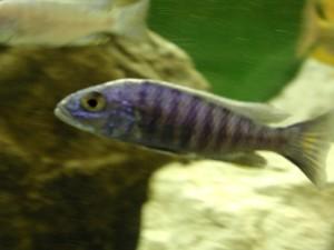 aquarium, poissons