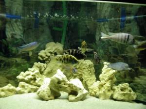 aquarium, fish, high resolution