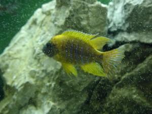 aquarium, poissons, eau salée