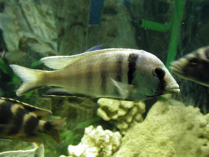 aquarium, fish, stock, photo