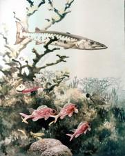 barracuda, reef, fishes