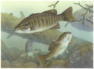 à petite bouche, basse, poissons, sous-marin, micropterus dolomieu