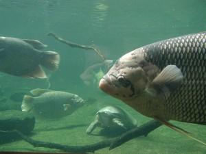 grand, poissons, sous-marin, à proximité