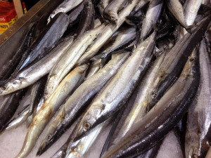 display, freshly received, pacific saury, cololabis saira