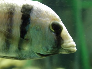 fish, head
