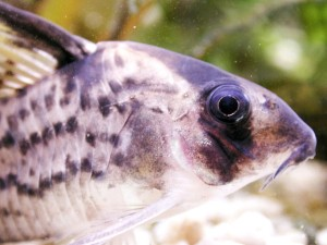 fish, head, up-close, water