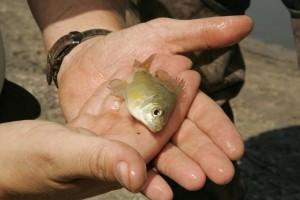 fish, hands
