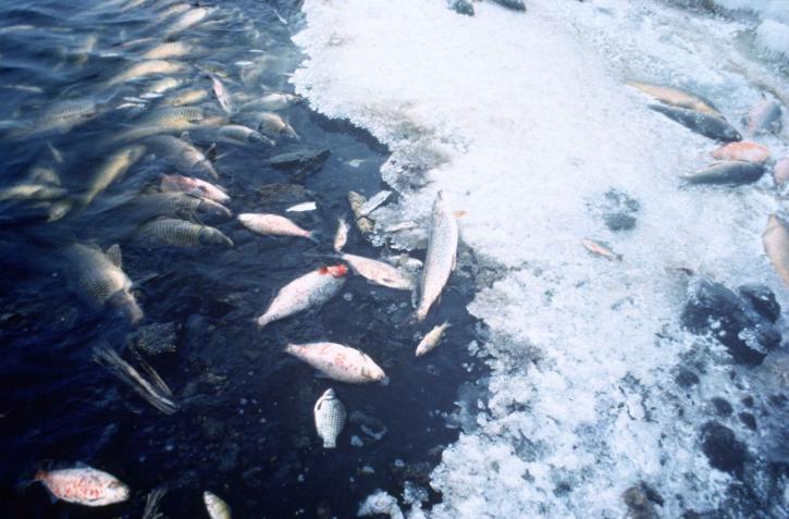 fish, kill, pollution