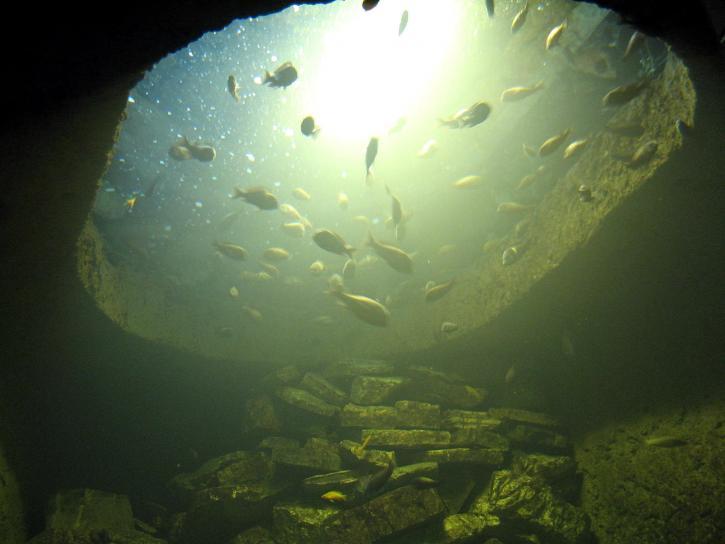 poissons, lumière