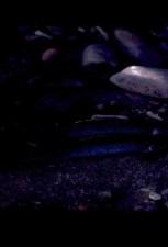 grayling, ryby pod vodou