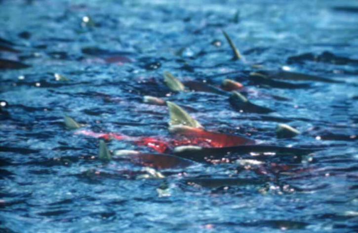 shoal, fish, shallows