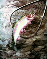 golden, trout, fish, salmo, aguabonita