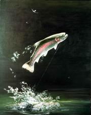arc en ciel, truite, poissons, salmo, gairdneri