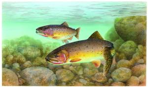 trucha, asesino, pescado, Oncorhynchus, clarkii, clarkii
