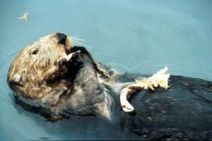 fulmar, animal, water